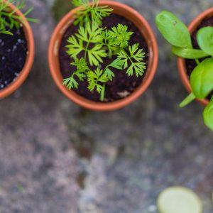Mit Blumentopf und Erde die Welt retten: Garteln