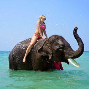 Warum wilde Tiere keine Touristenattraktion sind