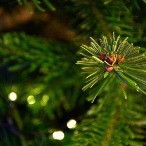 #nachhaltigeWeihnachten
