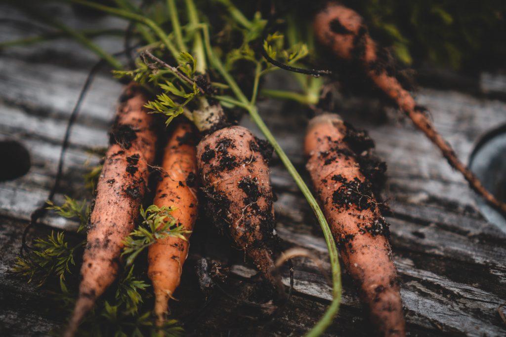 Regrowing Karotten