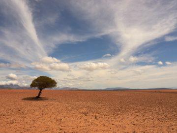Einsamer Baum auf verdörrtem Boden.