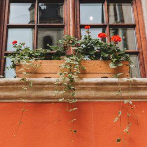 Möchtest Du dein Fensterbrett begrünen? Hier ist unser Guide für dich!