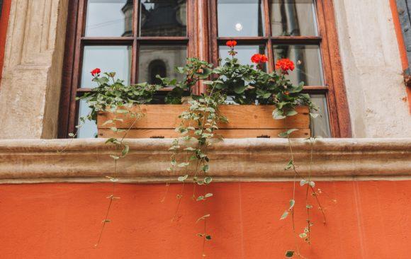 Begrünung deines Fensterbretts: Ein Guide für alles