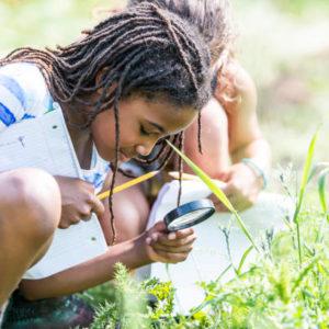 Citizen Science – wie DU den Artenschutz in Österreich unterstützen kannst